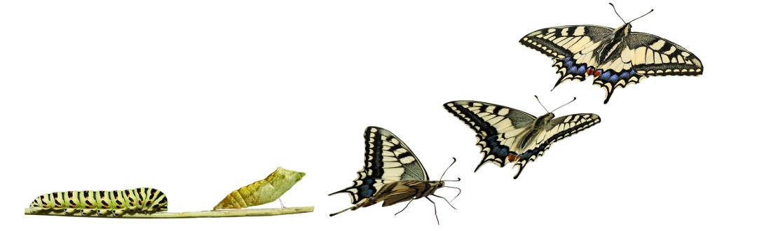 Dynamique Evolutive du Changement